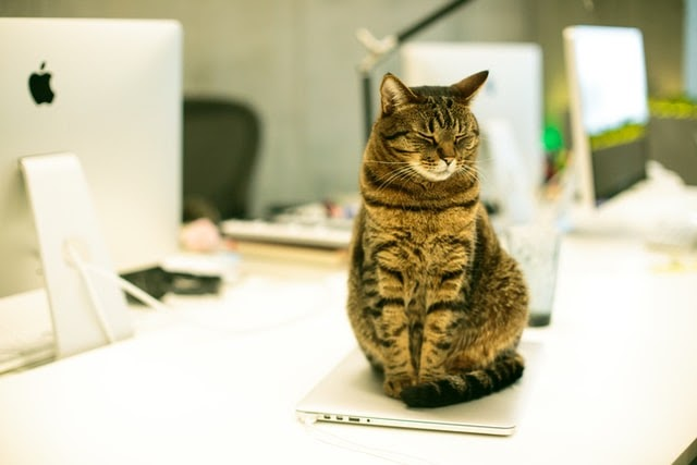 A cat sitting on top of a tablet on a desk next to a computer.
