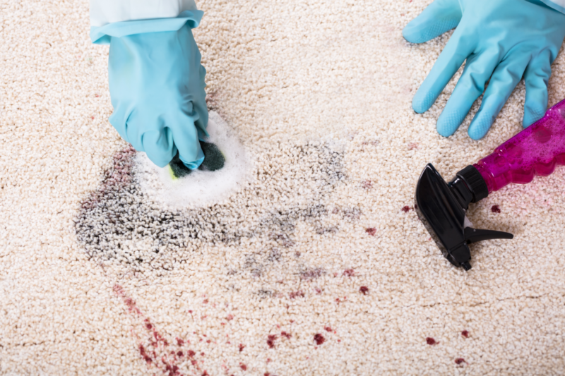 Gloved hands cleaning a stain out of a white carpet.